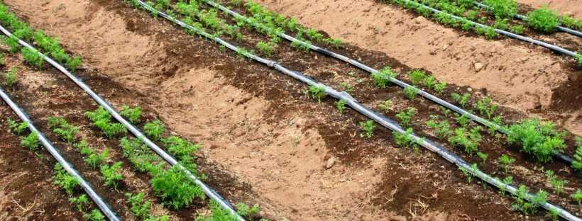 Invernadero automatizado dia 3 riego por goteo my - Sistema de riego por goteo automatizado ...